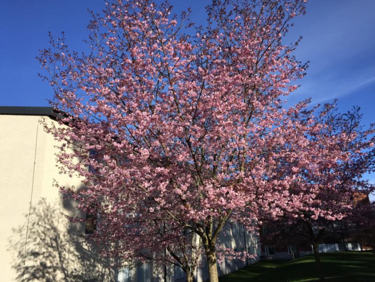 58GradNord - Frühlingsanfang