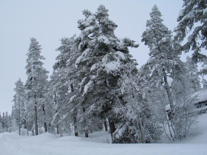 Winter in Schweden - Winterwonderland