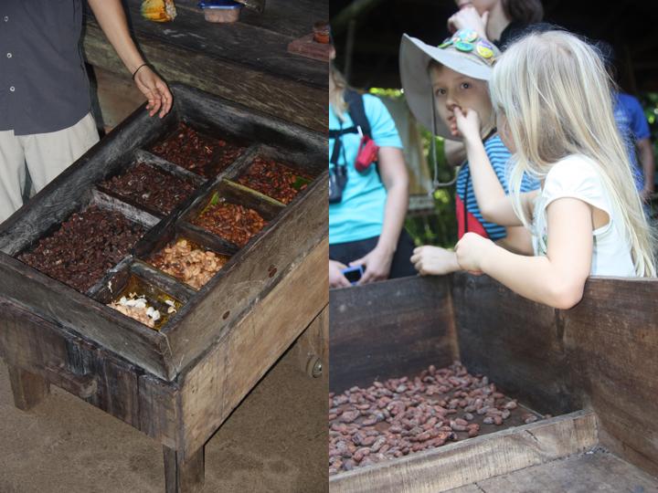 Links: Unterschiedliche Fermentierungsstadien Rechts: Getrocknete Kakaobohnen