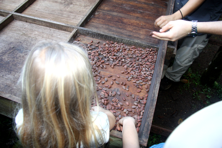 Die Kakaobohnen trocknen auf natürliche Art und Weise