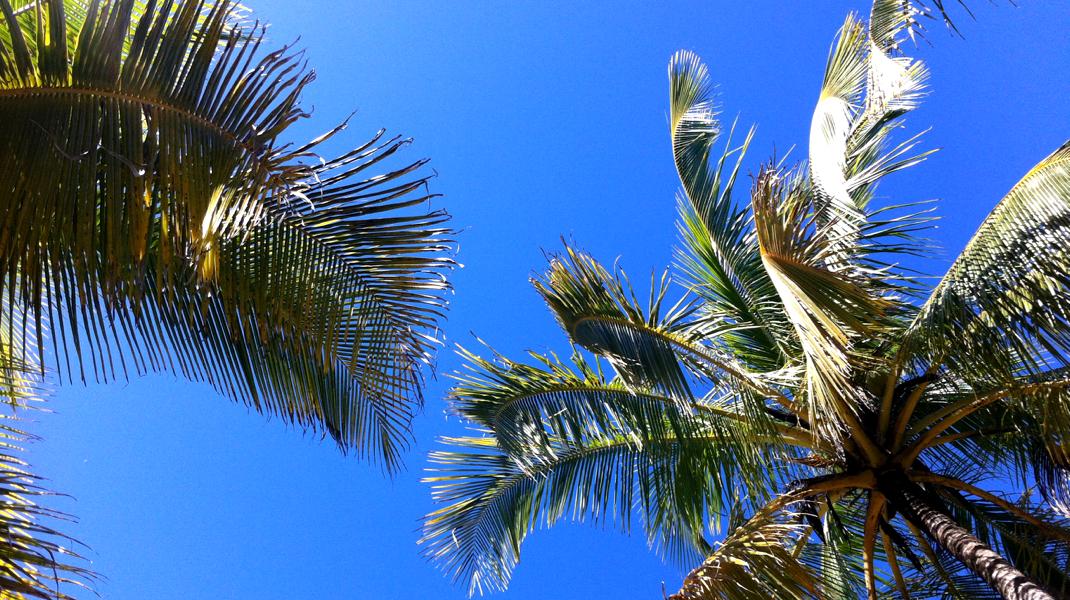 58GradNord - Weihnachten unter Palmen in Costa Rica