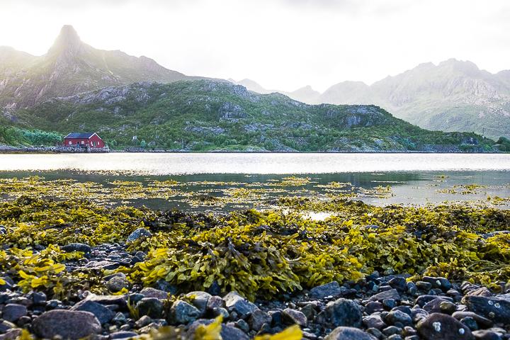 Norwegen mit Kindern - Lofoten Roadtrip - Kabelvåg