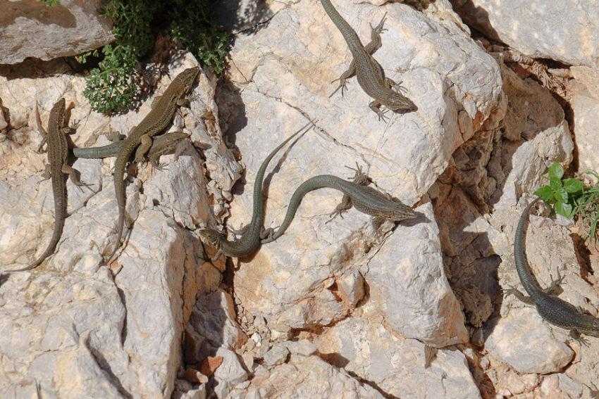 58 Grad Nord - Mallorca mit Kindern - Ausflug zur Dracheninsel Sa Dragonera