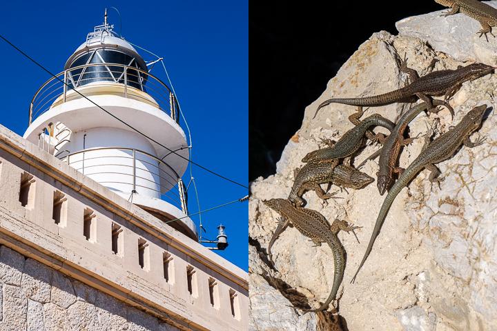 58 Grad Nord - Mallorca mit Kindern - Sa Dragonera - Leuchtturm & Eidechsen