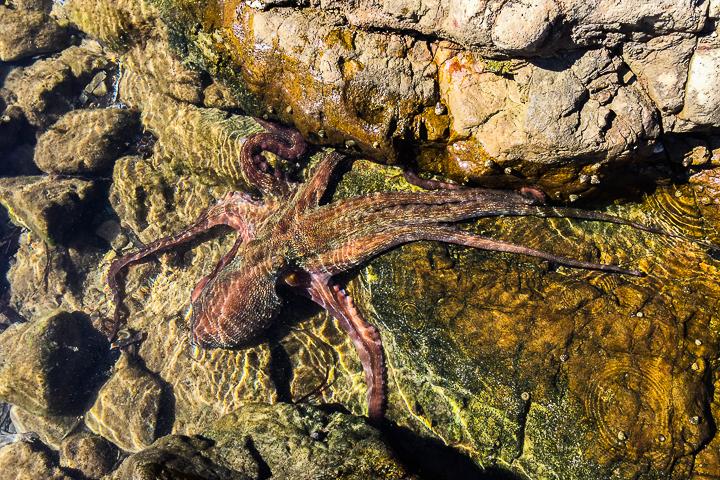 58 Grad Nord - Mallorca mit Kindern - Sa Dragonera - Tintenfisch