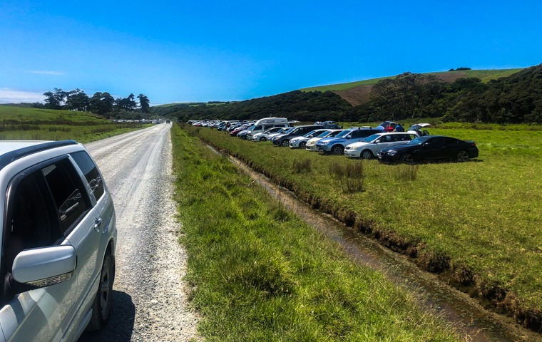 58 Grad Nord - Kiwi-Tagebuch - Tawharanui Beach Hochsaison Parken