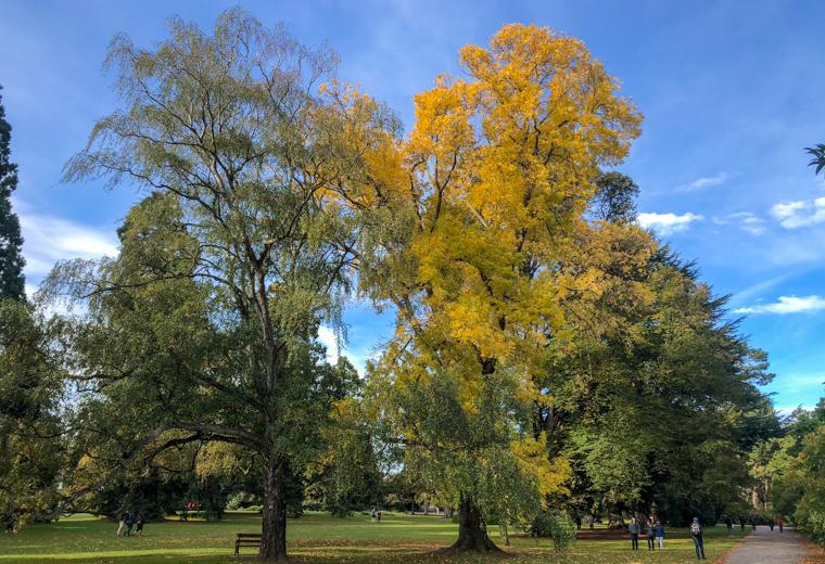58 Grad Nord - Christchurch mit Kindern - Botanischer Garten