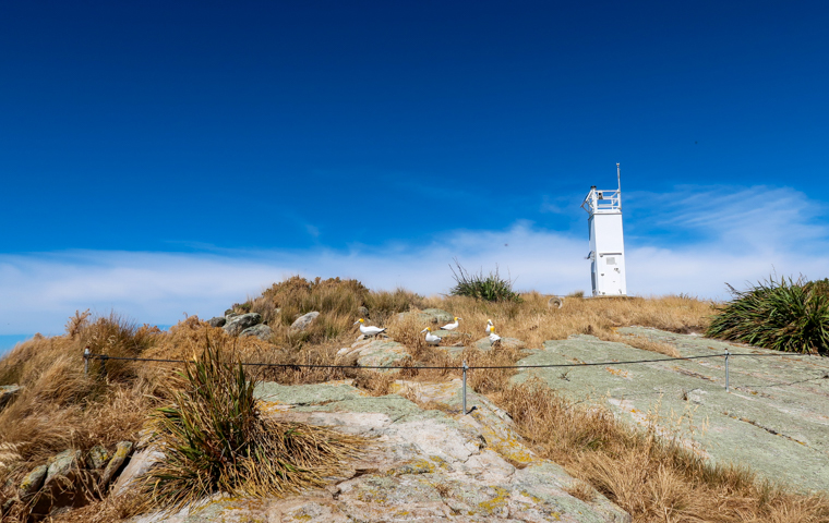 58 Grad Nord - Neuseeland - Golden & Tasman Bay - Abel Tasman Coast Track - Separation Point - Gannets