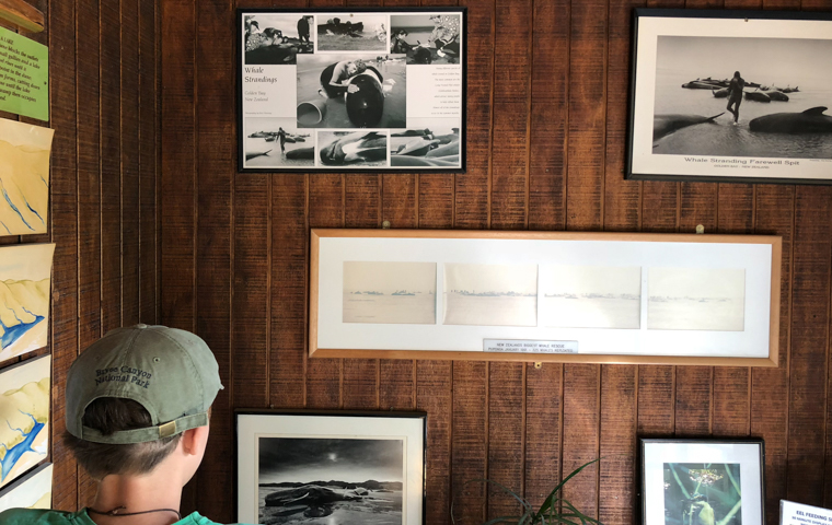 rad Nord - Neuseeland - Golden & Tasman Bay - Farewell Spit - Whale Stranding 2017