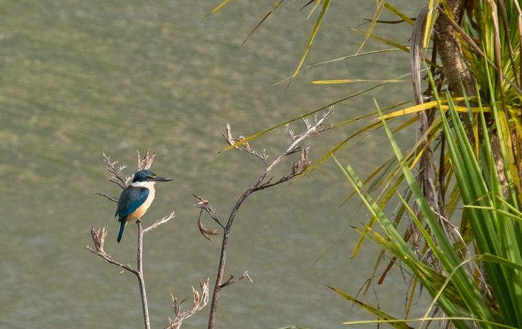 rad Nord - Neuseeland - Golden & Tasman Bay - Tata Beach - Kingfisher