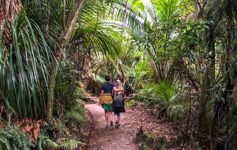 rad Nord - Neuseeland - Golden & Tasman Bay - Wainui Falls - Rain Forest