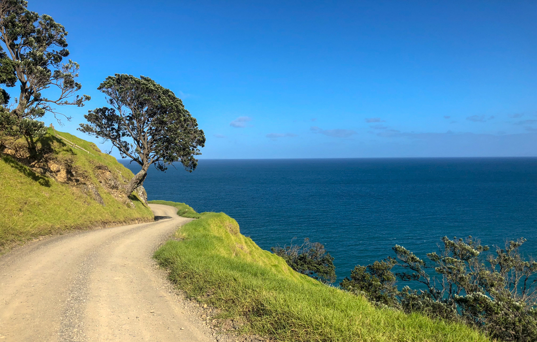 58 Grad Nord - Coromandel Coastal Walkway - Port Jackson Road