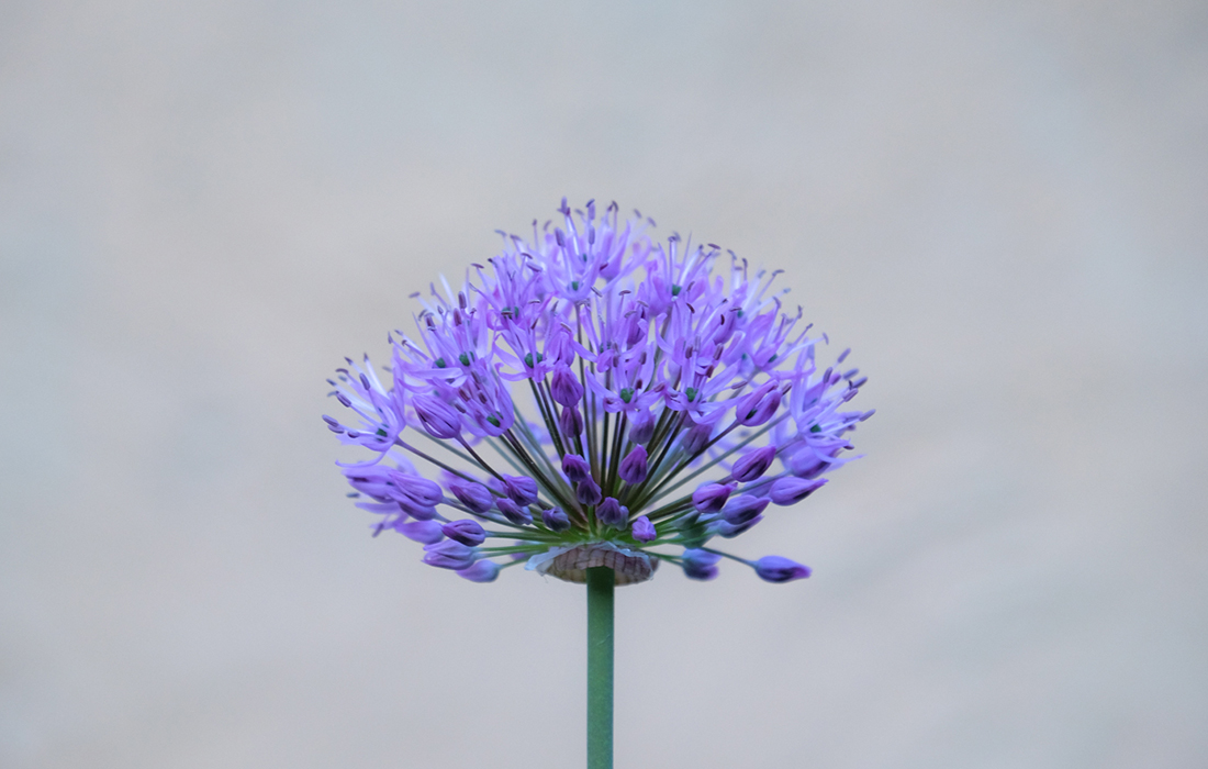 58GradNord #FoPa2019 Pflanze